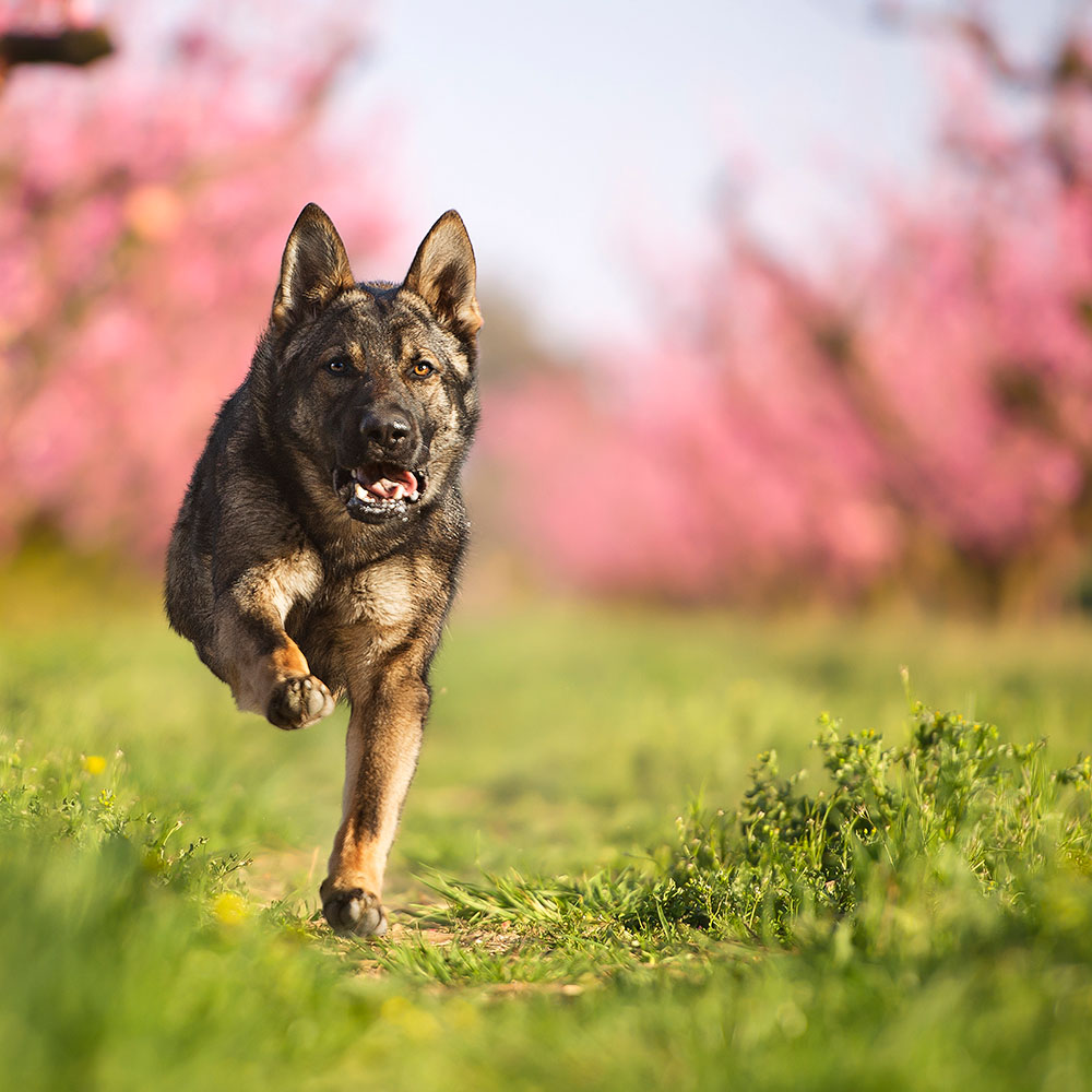 Fotografie di cani